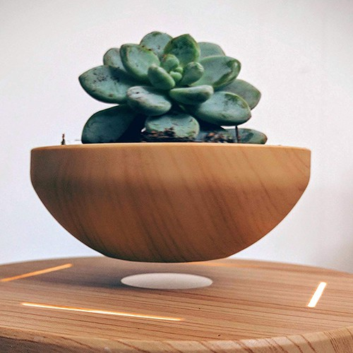Hovering Bonsai Tree – Cool Things For Your Room On Amazon